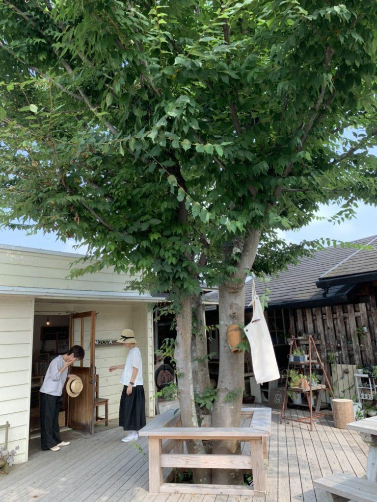 シンボルツリー(モッカの木)